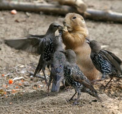 من أغرب ما ألتقطته العدسات من غرائب صور للطيور - مواقف مضحكة للطيور وصور نادرة
