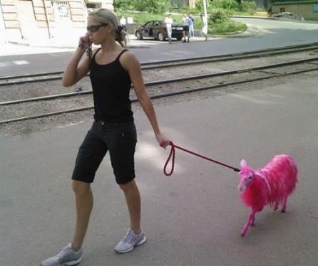 http://www.strangeshots.com/wp-content/uploads/2008/08/pinksheep-446x374.jpg